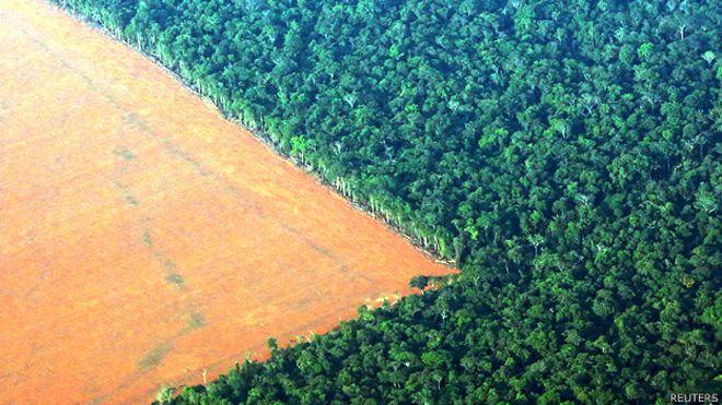 Selva amazónica junto a tierra talada y preparada para la plantación de soya en Mato Grosso, Brasil