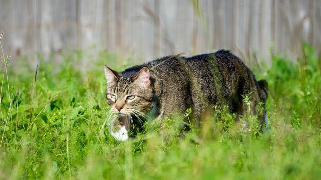 Кот смертоносный
