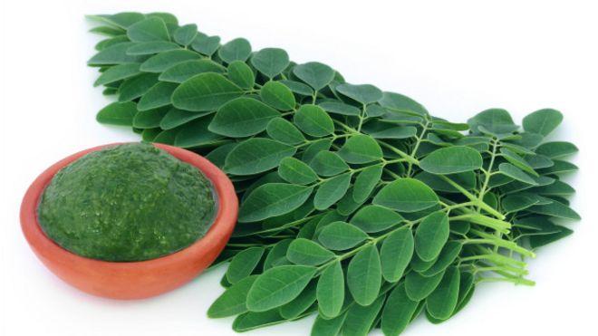 Como se toma la moringa en hojas para adelgazar