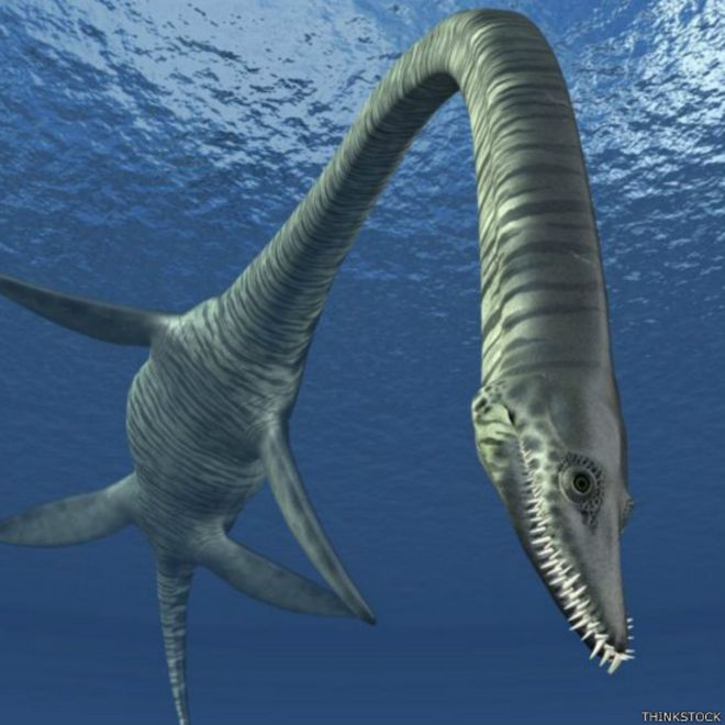 Картинки по запросу Плезиозавр