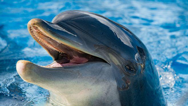 дельфины скачать игру