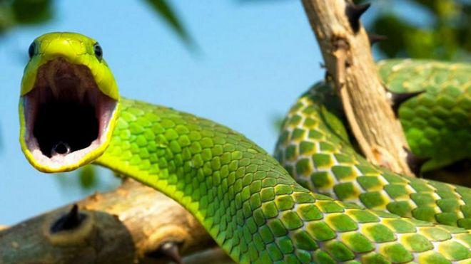 Боїтеся павуків і змій? Вчені пояснили, чому