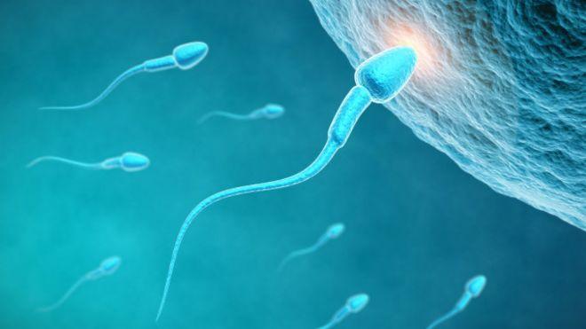 En al llegar horas espermatozoide tarda se ovulo cuantas un