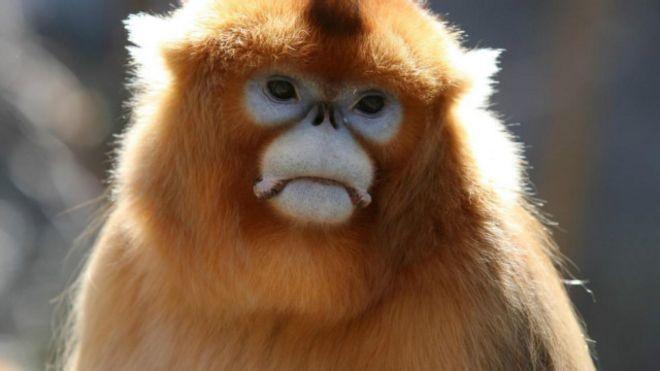 64+ Gambar Monyet Paling Bagus
