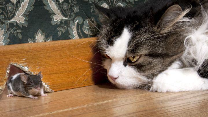 Fotos de elefantes con ratones ratona con bebes ratones - Como cazar ratones ...