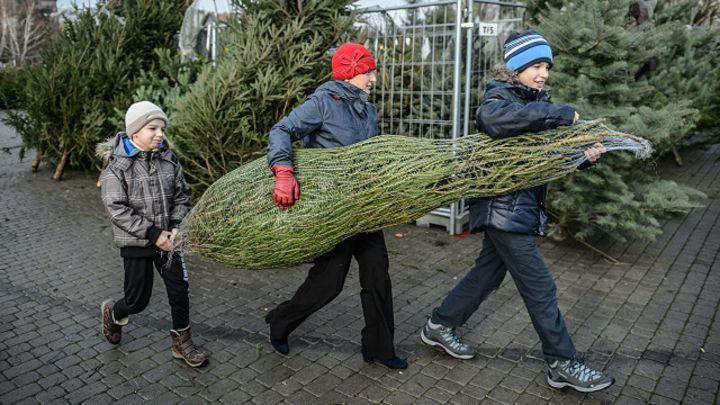 fdef0cb7d13 El dilema de cada año  ¿árboles de Navidad naturales o artificiales  - BBC  News Mundo