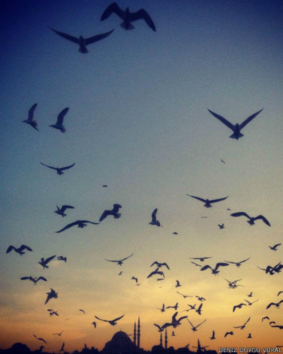 Sizin fotoğraflarınız: Kuşlar
