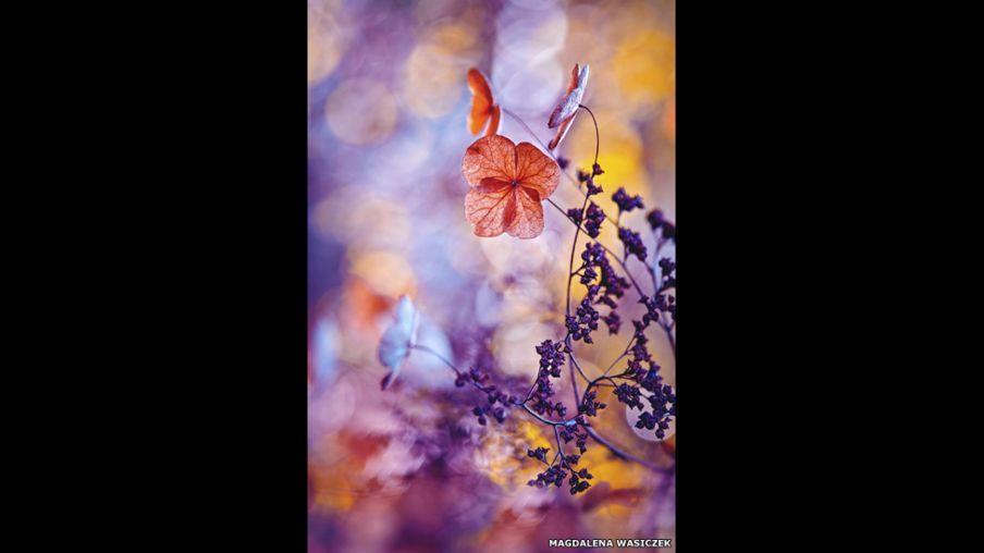 Fotoğraflarla: Doğanın Güzelliği