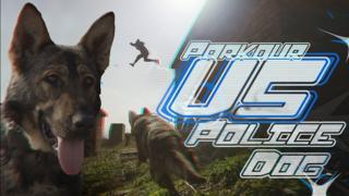 Parkour v dog