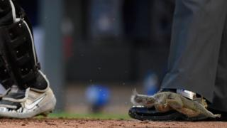 Squirrel at MLB game