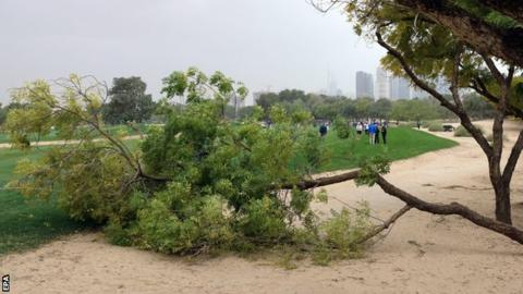 Several trees were brought down by high winds in the Gulf state