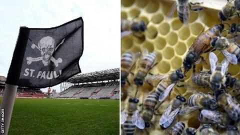 St Pauli bees
