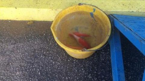 Staff were allowed into Brunton Park on Tuesday - and found the fish as the water receded on Thursday