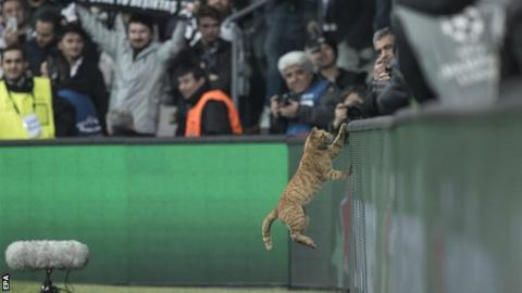 Ginger cat on the pitch in Turkey