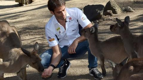 Felipe Nasr of Sauber