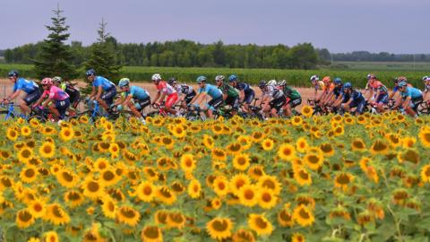 Cormons, Italy, 27 July: The peloton rides past a field of sunflowers during stage 4 of the Adriatica Ionica Race from Padola to Cormons in Italy. (Photo by Luc Claessen/Getty Images)