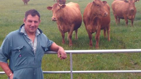 Julian White and some cows
