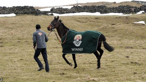 Grand National winner Auroras Encore takes a stroll with assistant trainer Ryan Clavin