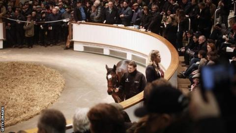 Lot Number 1103 walks around the sale ring with his stud hand