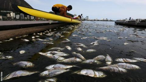 Thirty Two Tonnes Of Dead Fish Have Been Cleared Out The Lagoon Where Olympic Rowing And Canoeing Events Will Take Place At Rio 2016