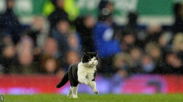 Cat on the pitch at Goodison Park