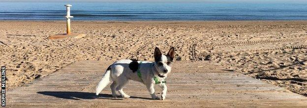 Sophie Mullins dog