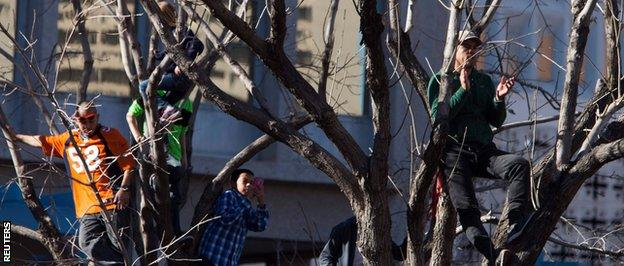 Holly Holm fans climb a tree