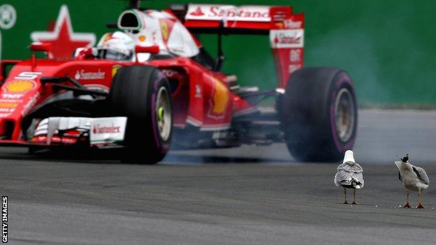 Sebastian Vettel complained of seagulls obstructing him during the Canadian Grand Prix