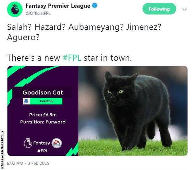The Goodison Cat has been priced at £6.5m on Fantasy Premier League