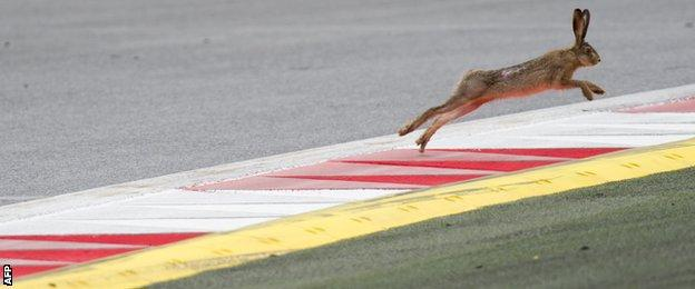 After a beaver invaded the track at Canada, Austria was treated to a hare tackling the Spielberg kerbs