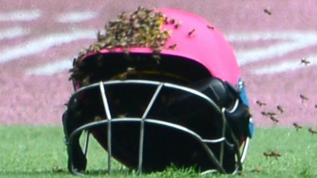 South Africa V Sri Lanka Bees Stop Play In Third Odi