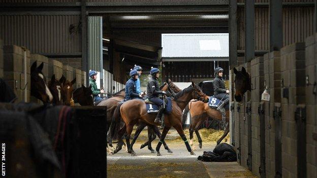 Tiger Roll among horses at Gordon Elliott's stables