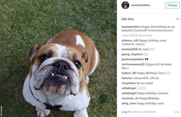 Lewis Hamilton's dog's birthday