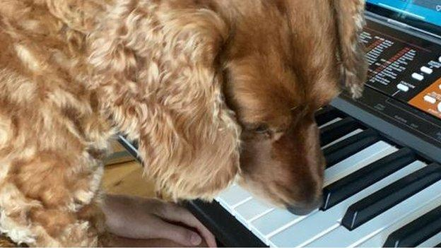 Leah Williamson playing piano with dog