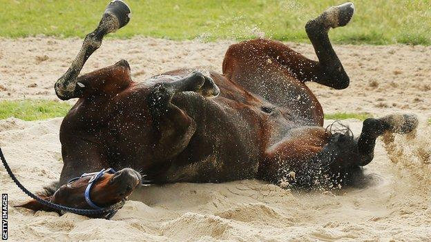 Nakeeta takes a roll in the sand during the Werribee International Gallops at Werribee Racecourse