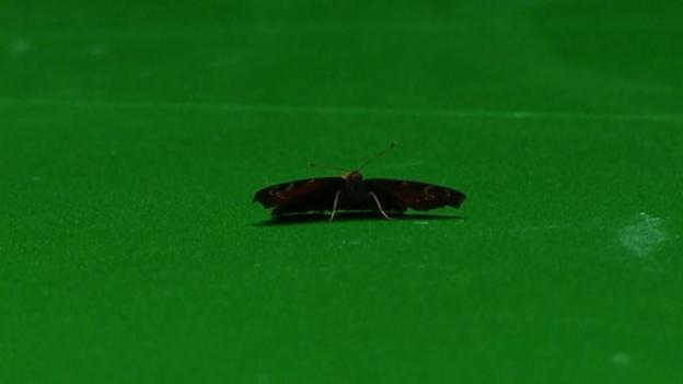 Butterfly effects chaos at snooker