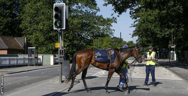 Lady Aurelia crosses the road at Ascot in 2017