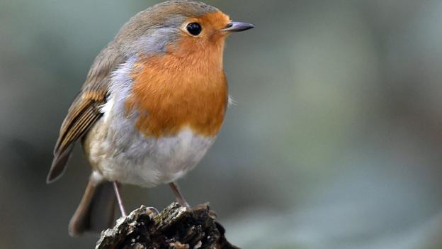 Robins v Robins: Can you name the other animal nicknames of