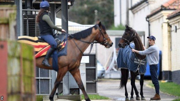 Horses at Simon Crisford's stable
