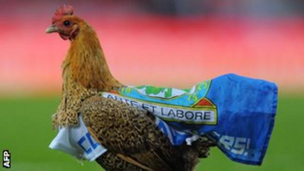 The chicken on the Ewood Park pitch