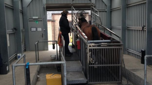 Just like humans, horses can also go on treadmills to keep fit . Maureen Haggas, wife of trainer William, explains they travel on a six-degree incline in three two-minute stretches at 36mph and enjoy the safety of a level surface rather than potentially uneven ground