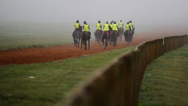 Racehorses on Newmarket gallops