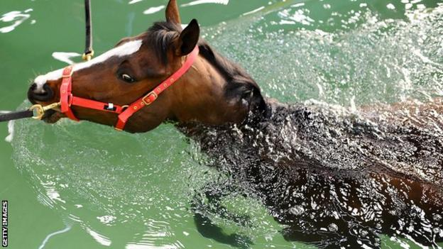 A horse exercises in a swimming pool at Jonjo O'Neill's yard in Gloucestershire