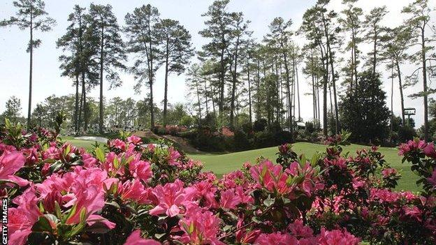 Banks of pink azaleas in the foreground and a row of pine trees flank a green at Augusta