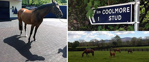 Stallion Galileo, a sign for the Coolmore Stud, and horses relaxing in a field