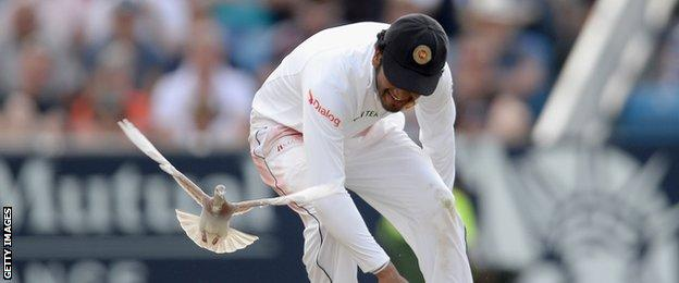 Sri Lanka's Dimuth Karunaratne attempts to catch a pigeon