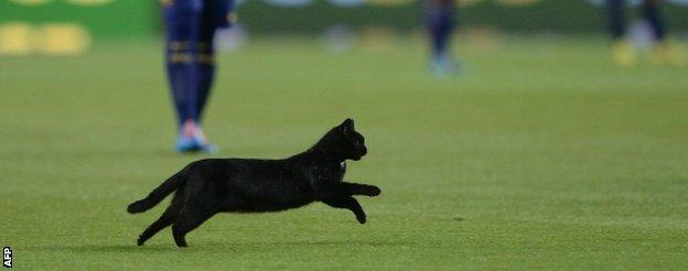 Cat at Barcelona