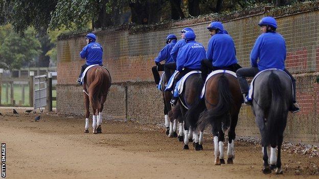 Godolphin horses in Newmarket