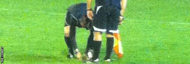 Hedgehog being investigated by referee and linesman