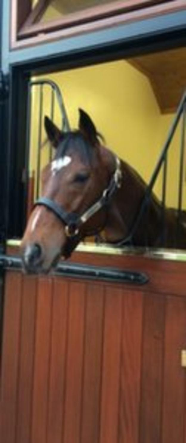 Frankel in his stable at Banstead